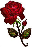 Rose-gros